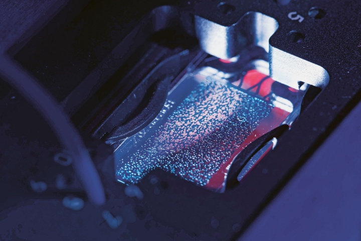 Glasträger mit einem porösen Mikromodell.