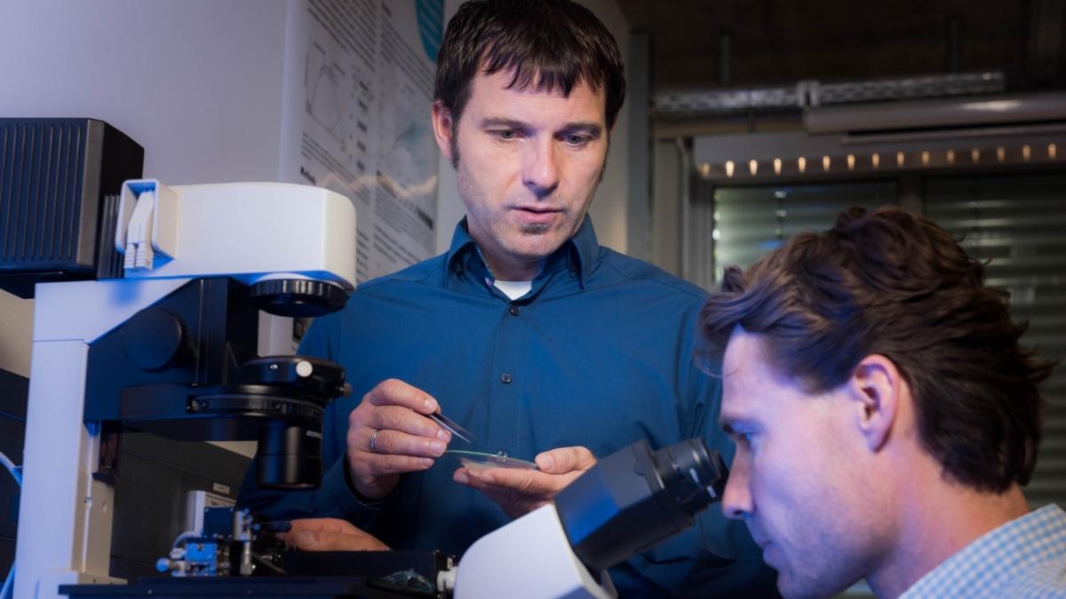 Analyse der Mikrostruktur von Muskelgewebe  Max Kovalenko