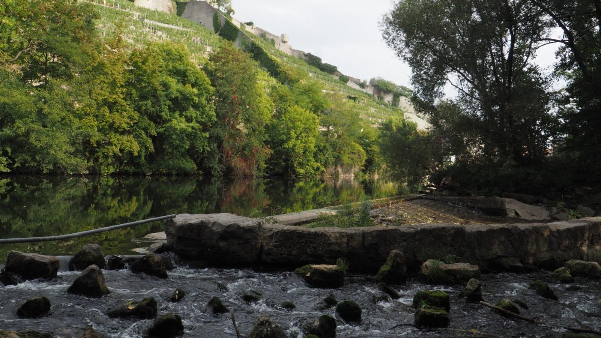 Studiengang Umweltschutztechnik: Wasser Fischtreppe in Vaihingen(Enz) Foto: ISWA/Uni Stuttgart