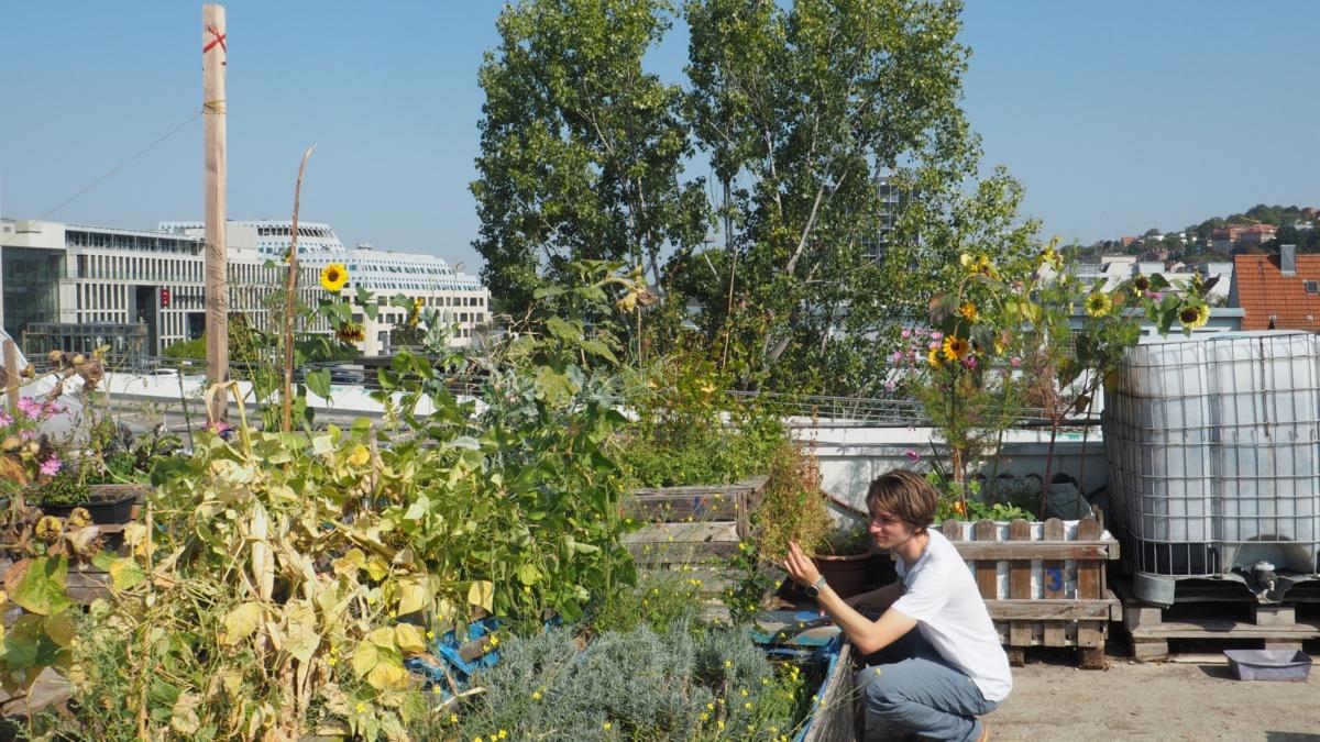 Studiengang Umweltschutztechnik: Miteinander Die Umwelt lässt sich nur gemeinsam retten: Mitmachgarten in Stuttgart Foto: ISWA/Uni Stuttgart