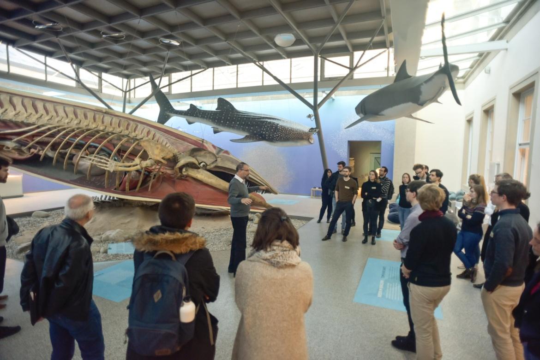 Ausstellungssaal mit Meerestieren im Naturkundemuseum (c)