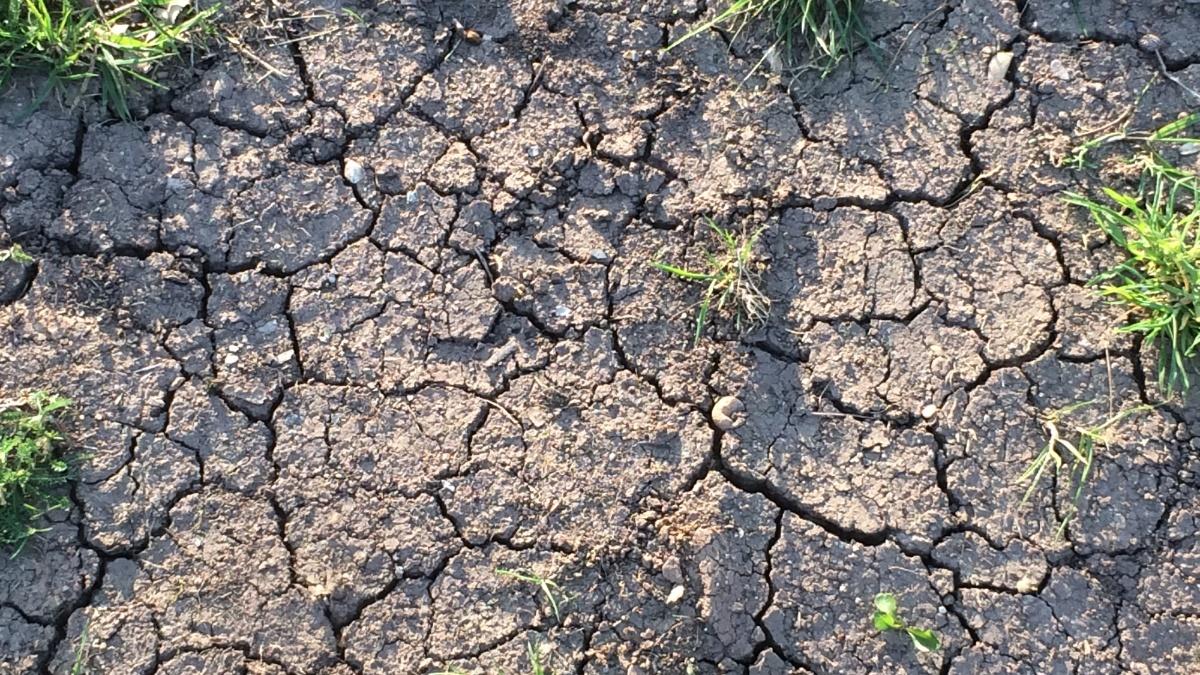 Dry, cracked soil.