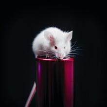 Maus (Symbolbild)