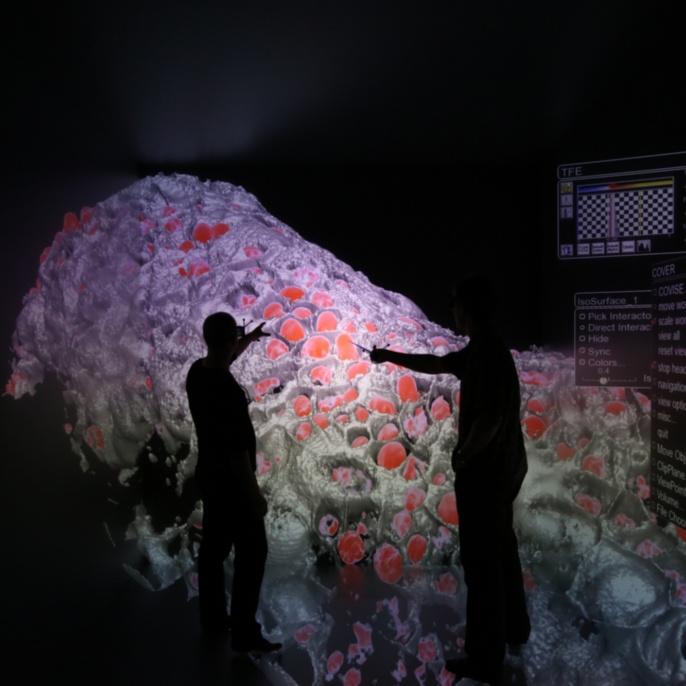 Visualisierung von Lichtschnittmikroskopie-Daten zusammen mit der Oberflächendarstellung der Zellwände, Emmanuel Reynaud, Uwe Wössner