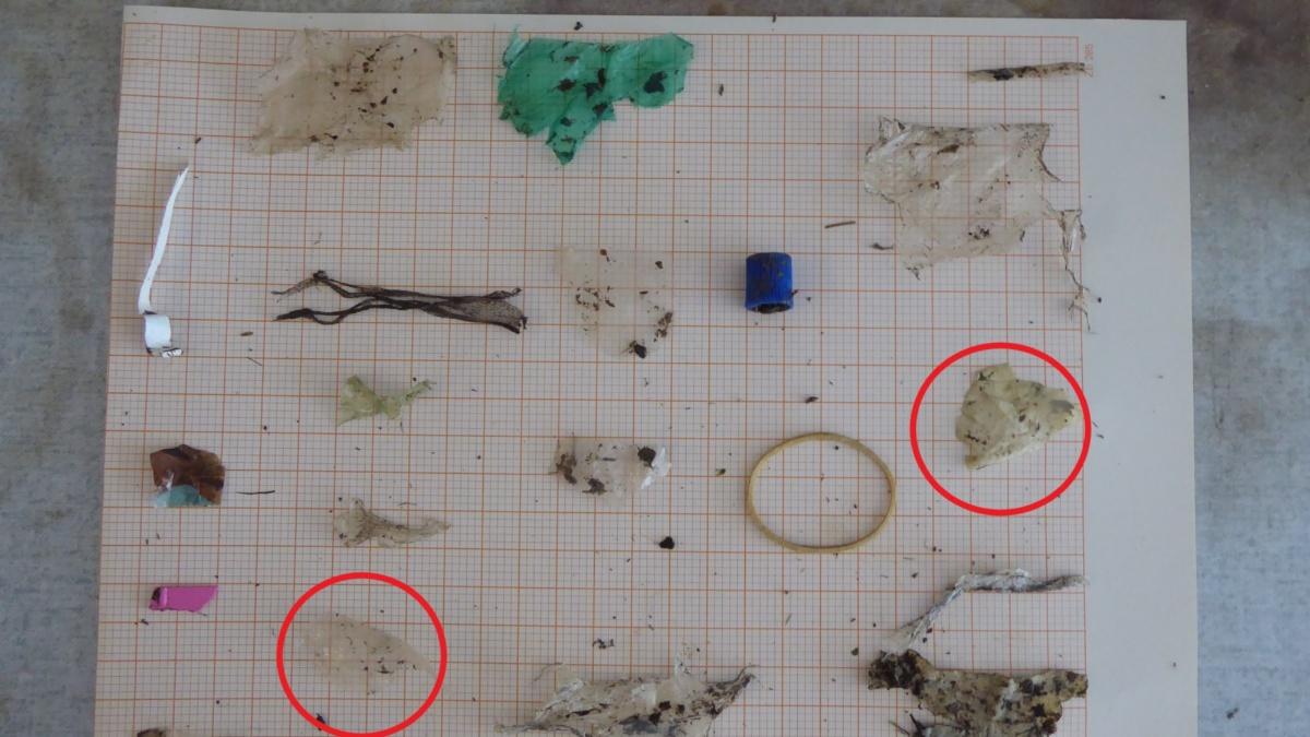 Die einzelnen Fremdkörper wurden aus dem Kompost sortiert und vermessen, darunter auch Fragmente von Biokunststoff-Folien