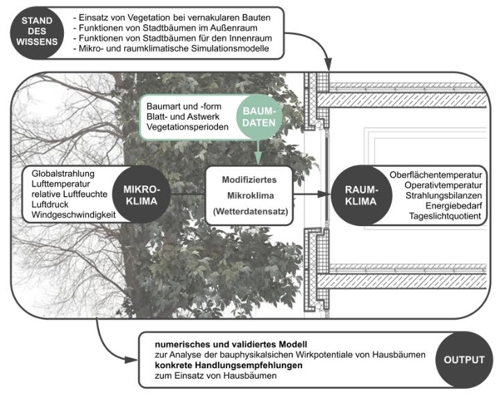Ein bestimmtes Mikroklima mit zugehörigen variierenden Faktoren (Luftdruck, Windgeschwindigkeit …) steht in wechselseitiger Einflussnahme zu Bäumen mit variierenden Faktoren (Art, Blühzeit …). Daraus ergibt sich ein modifiziertes Mikroklima. Das modifizierte Mikroklima wiederum steht in wechselseitiger Wirkung zum Innenraumklima, etwa durch Lichteinfall oder auch Beschattung der Fassade.
