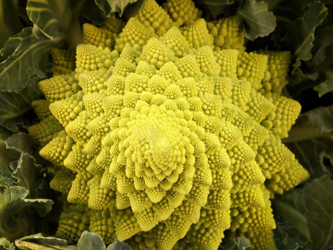 Picture of cabbage Romanesco. Just like matryoshka dolls, the individual parts have the same shape as the larger ones, so they are fractal.