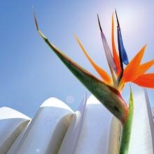 Beispiel für die erfolgreiche Entwicklung eines bionischen Produktes: Flectofin®, ein neuartiges Fassaden-Verschattungssystem. Als Ideengeber diente der Öffnungsmechanismus der violetten Landestange der Blüte der Paradiesvogelblume (Strelitzia reginae). Beispiel für die erfolgreiche Entwicklung eines bionischen Produktes: Flectofin®, ein neuartiges Fassaden-Verschattungssystem. Als Ideengeber diente der Öffnungsmechanismus der violetten Landestange der Blüte der Paradiesvogelblume (Strelitzia reginae).