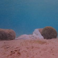 Plastik zwischen Korallen auf dem Meeresgrund vor Curacao.